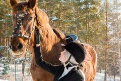 Jinete y caballo hermosos jovenes de la muchacha en bosque del invierno Fotos de archivo