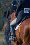 Jinetes competitivos del caballo Fotografía de archivo