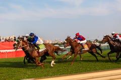 Jinetes de la carrera de caballos que apuestan el público Fotos de archivo