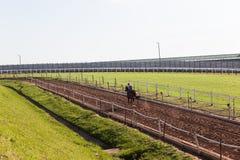 Jinetes de la carrera de caballos que entrenan a la pista Imagen de archivo libre de regalías