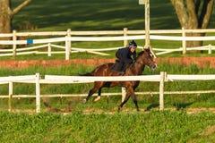 Jinetes de los caballos de raza que entrenan a la pista Imagenes de archivo