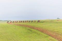 Jinetes de los caballos de raza que entrenan a paisaje Imagenes de archivo