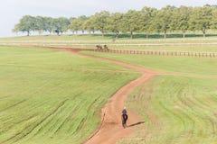 Jinetes de los caballos de raza que entrenan a paisaje Foto de archivo