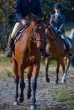 Jinetes del caballo en campo Foto de archivo