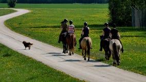 Jinetes del caballo en el camino