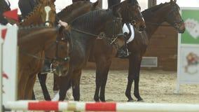 Jinetes ecuestres - participantes de la competencia del montar a caballo - en sementales de la bahía en la arena ecuestre almacen de video