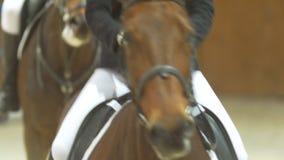 Jinetes en los caballos en la arena ecuestre almacen de metraje de vídeo