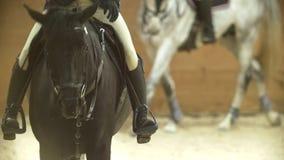 Jinetes en los caballos en la arena ecuestre, a cámara lenta metrajes