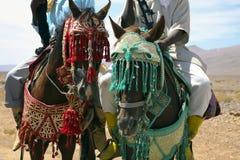 Jinetes marroquíes Fotos de archivo libres de regalías
