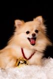 Jingle Bell Puppy Stock Photography