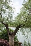 Jingshan lake Royalty Free Stock Image