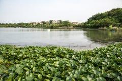 Jingshan lake Stock Image