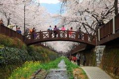 Jinhae cherry blossom, South Korea Stock Images
