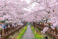 JINHAE,KOREA - APRIL 4 : Jinhae Gunhangje Festival. Stock Images