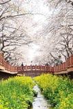 JINHAE, KOREA - APRIL 2, 2009: Yeojwacheon in Jinhae, Korea. Fam Royalty Free Stock Image
