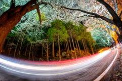 jinhae mountain road stock photography