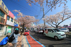 Jinhae street view in South Korea Royalty Free Stock Photography