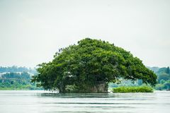 Jinja Uganda Source of the Nile River. Natural Beauty in Uganda is found in all regions of the country Stock Image