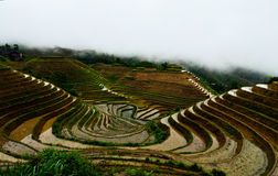 Jinkeng terraced rice fields in Longshan,Guilin. The Jinkeng terraced rice fileds in Longshan full of water, before planting rice Royalty Free Stock Photo