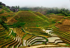 Jinkeng terraced rice fields in Longshan,Guilin. The Jinkeng terraced rice fileds in Longshan full of water, before planting rice Stock Photo