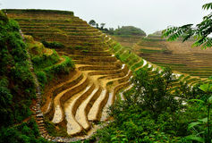 Jinkeng terraced rice fields in Longshan,Guilin. The Jinkeng terraced rice fileds in Longshan full of water, before planting rice Stock Images