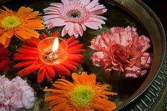 Jinpen daisy floating candles Royalty Free Stock Image
