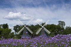 Jinzhou City, Liaoning Province, the Expo lavender flowers Royalty Free Stock Images