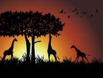 Jirafa, árbol y pájaro silueteados contra una copita Foto de archivo