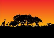 Jirafa con el fondo de la puesta del sol stock de ilustración