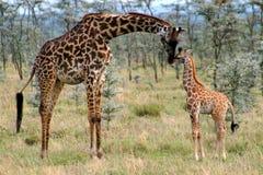 Jirafa de la mama y del bebé