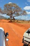Jirafa del safari Imagen de archivo