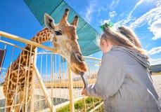 Jirafa divertida joven y niña hermosa en el parque zoológico Fotos de archivo libres de regalías