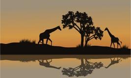 Jirafa en el paisaje de la puesta del sol Fotos de archivo