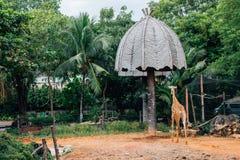 Jirafa en el parque zoológico de Dusit en Bangkok, Tailandia imágenes de archivo libres de regalías