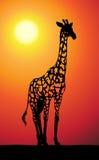 Jirafa en la puesta del sol Ilustración del Vector