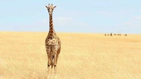 Jirafa en Masai Mara metrajes