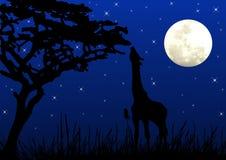 Jirafa que come en claro de luna imagen de archivo