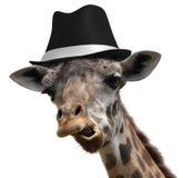 Jirafa tonta que lleva un sombrero de ala y que hace una cara inusual imagen de archivo