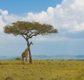 Jirafa y un árbol Imagen de archivo