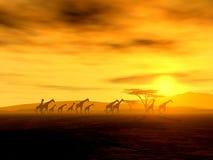 Jirafas africanas en la puesta del sol Foto de archivo