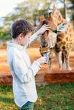 Jirafas de alimentación del muchacho joven en África Imagen de archivo libre de regalías