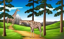 Jirafas en el bosque stock de ilustración