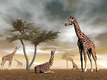 Jirafas en la sabana - 3D rinden libre illustration