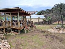 Jirafas en parque zoológico Foto de archivo