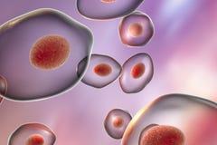 Jirovecii Pneumocystis, оппортунистический грибок бесплатная иллюстрация