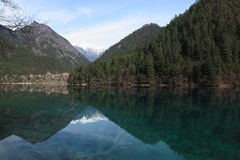 Jiu zai gou. Crystal clear azure blue waters of Panda Lake surrounded by connifers and mountainsides in Jiu Zhai Gou National Scenic Park in Sichuan Province Royalty Free Stock Photography