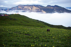 Jiudingshan Mountain meadow Royalty Free Stock Photos