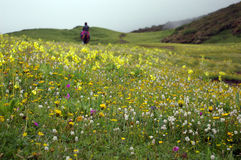 Jiudingshan Mountain meadow Stock Photos