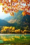 秋天jiuzhaigou湖结构树 免版税库存照片