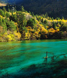 Jiuzhaigou湖 库存照片